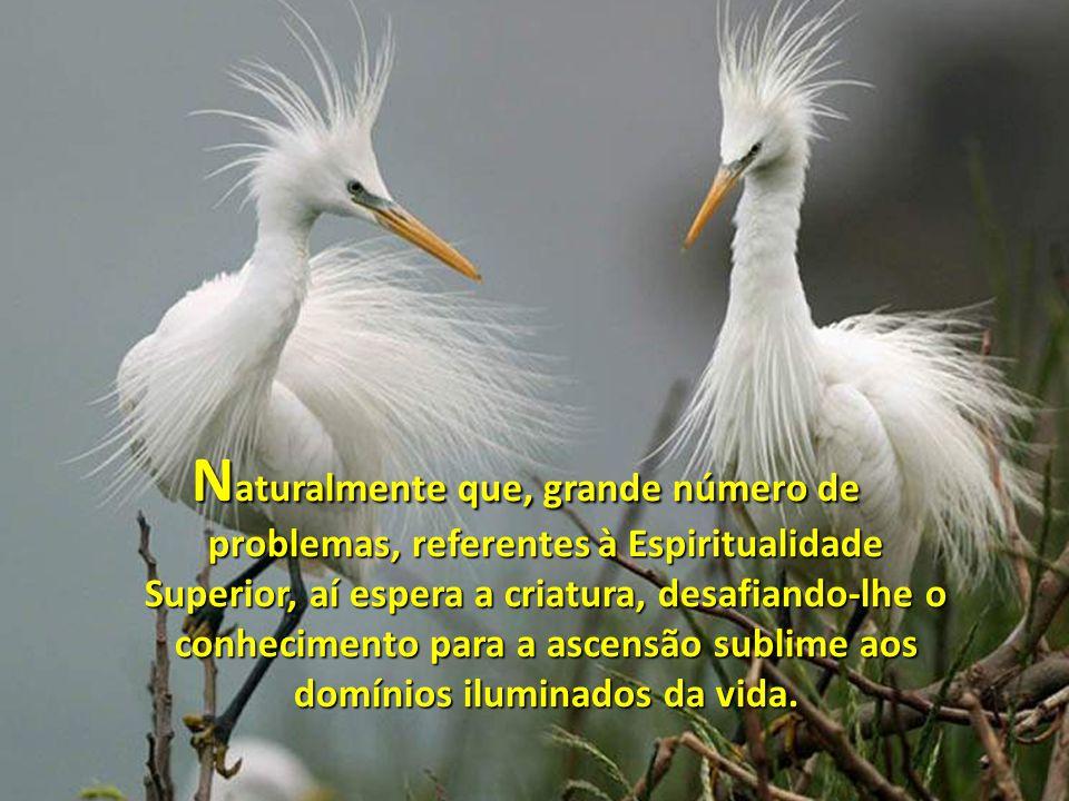 N aturalmente que, grande número de problemas, referentes à Espiritualidade Superior, aí espera a criatura, desafiando-lhe o conhecimento para a ascensão sublime aos domínios iluminados da vida.