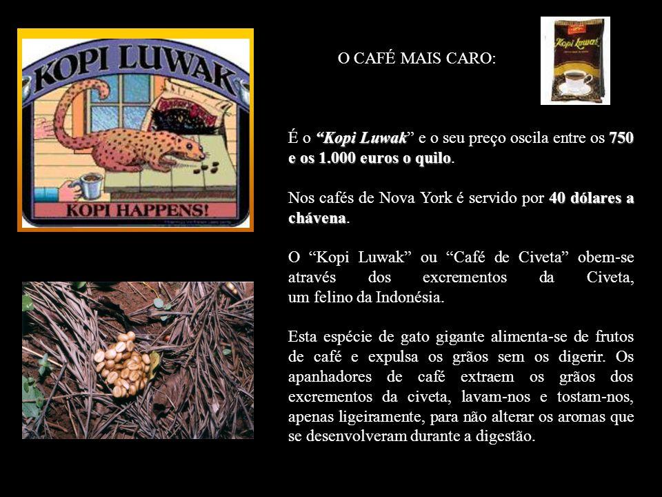 O CAFÉ MAIS CARO: Kopi Luwak 750 e os 1.000 euros o quilo É o Kopi Luwak e o seu preço oscila entre os 750 e os 1.000 euros o quilo.