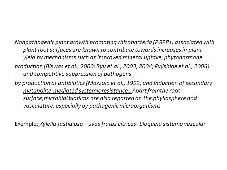 Nonpathogenic plant growth promoting rhizobacteria (PGPRs) associated with plant root surfaces are known to contribute towards increases in plant yield by mechanisms such as improved mineral uptake, phytohormone production (Biswas et al., 2000; Ryu et al., 2003, 2004; Fujishige et al., 2006) and competitive suppression of pathogens by production of antibiotics (Mazzola et al., 1992) and induction of secondary metabolite-mediated systemic resistance…Apart fromthe root surface,microbial biofilms are also reported on the phyllosphere and vasculature, especially by pathogenic microorganisms Exemplo: Xylella fastidiosa – uvas frutas cítricas- bloqueia sistema vascular
