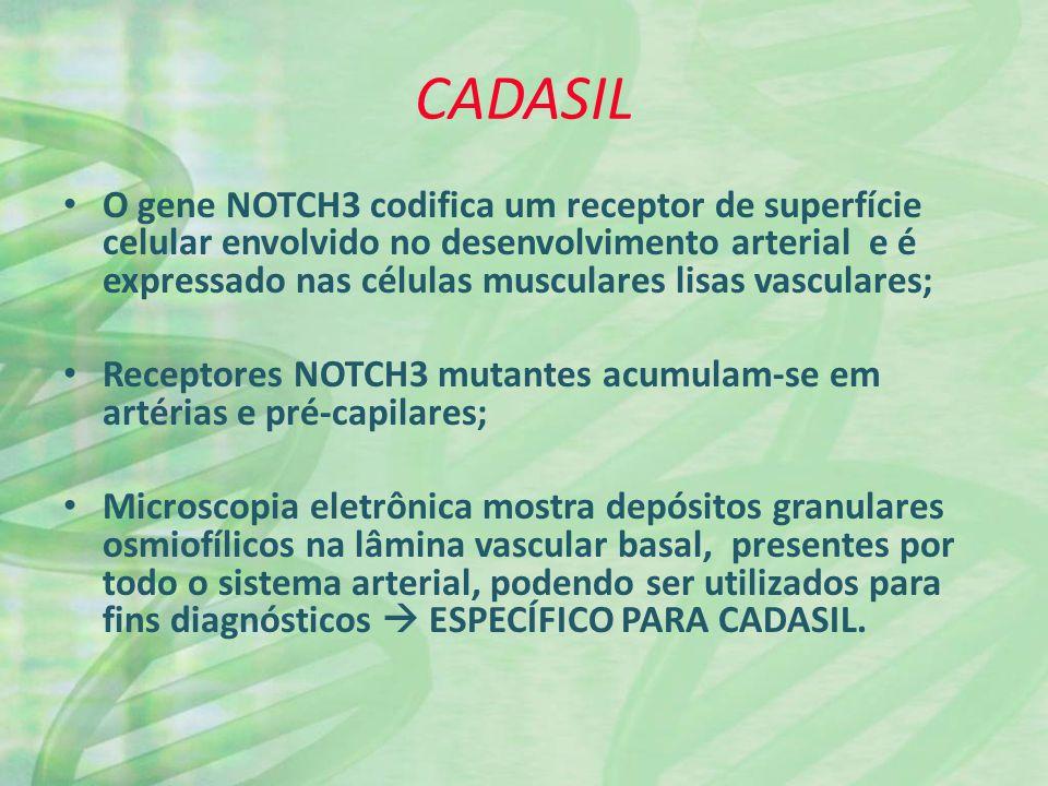 CADASIL O gene NOTCH3 codifica um receptor de superfície celular envolvido no desenvolvimento arterial e é expressado nas células musculares lisas vasculares; Receptores NOTCH3 mutantes acumulam-se em artérias e pré-capilares; Microscopia eletrônica mostra depósitos granulares osmiofílicos na lâmina vascular basal, presentes por todo o sistema arterial, podendo ser utilizados para fins diagnósticos ESPECÍFICO PARA CADASIL.