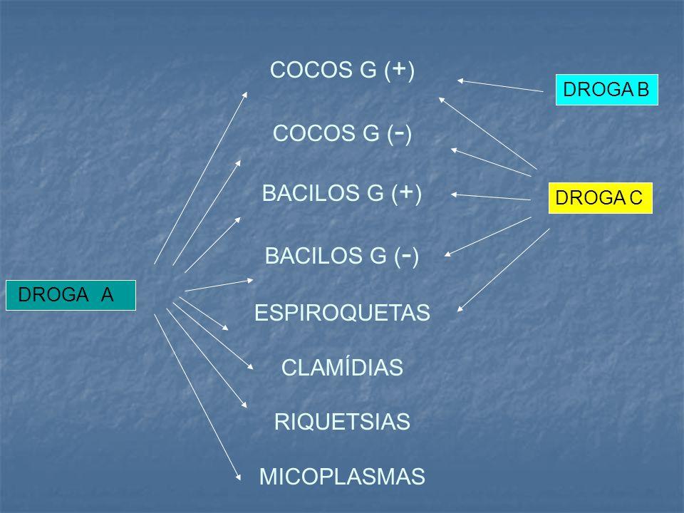 COCOS G ( + ) COCOS G ( - ) BACILOS G ( + ) BACILOS G ( - ) ESPIROQUETAS CLAMÍDIAS RIQUETSIAS MICOPLASMAS DROGA A DROGA B DROGA C