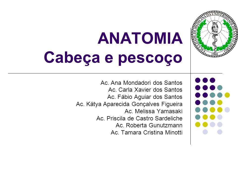 Glândulas Salivares Parótidas, Submandibulares e Sublinguais.