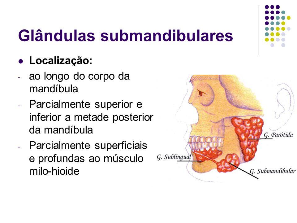 Glândulas submandibulares Localização: - ao longo do corpo da mandíbula - Parcialmente superior e inferior a metade posterior da mandíbula - Parcialme