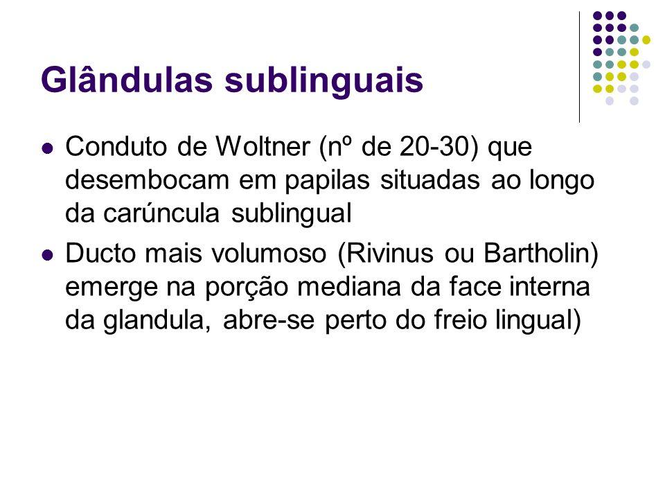 Glândulas sublinguais Conduto de Woltner (nº de 20-30) que desembocam em papilas situadas ao longo da carúncula sublingual Ducto mais volumoso (Rivinu