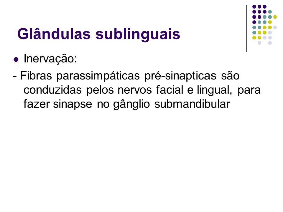 Glândulas sublinguais Inervação: - Fibras parassimpáticas pré-sinapticas são conduzidas pelos nervos facial e lingual, para fazer sinapse no gânglio s