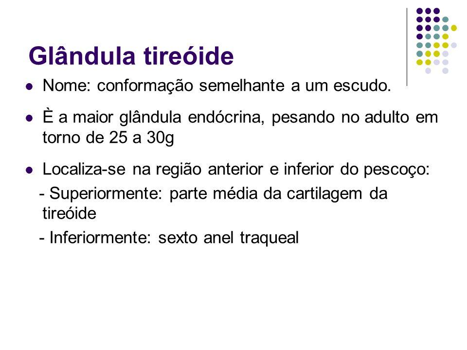 Glândula tireóide Nome: conformação semelhante a um escudo. È a maior glândula endócrina, pesando no adulto em torno de 25 a 30g Localiza-se na região