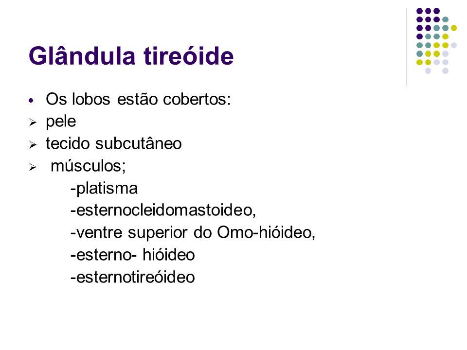 Glândula tireóide Os lobos estão cobertos: pele tecido subcutâneo músculos; -platisma -esternocleidomastoideo, -ventre superior do Omo-hióideo, -ester