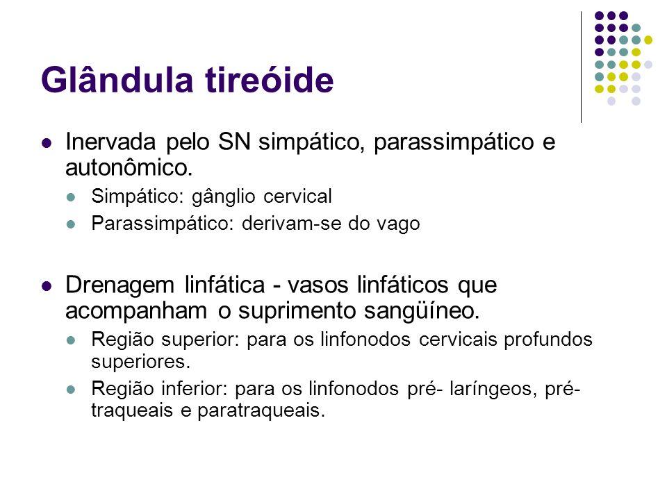 Glândula tireóide Inervada pelo SN simpático, parassimpático e autonômico. Simpático: gânglio cervical Parassimpático: derivam-se do vago Drenagem lin