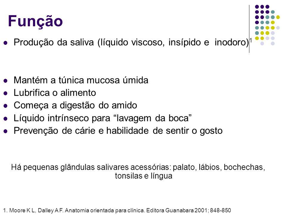 Produção da saliva (líquido viscoso, insípido e inodoro) 1 Mantém a túnica mucosa úmida Lubrifica o alimento Começa a digestão do amido Líquido intrín