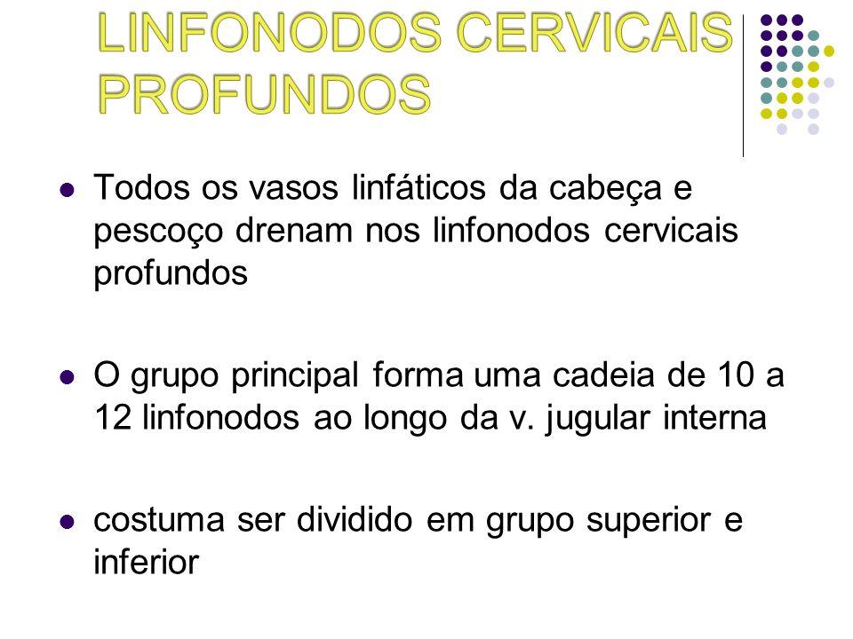 Todos os vasos linfáticos da cabeça e pescoço drenam nos linfonodos cervicais profundos O grupo principal forma uma cadeia de 10 a 12 linfonodos ao lo