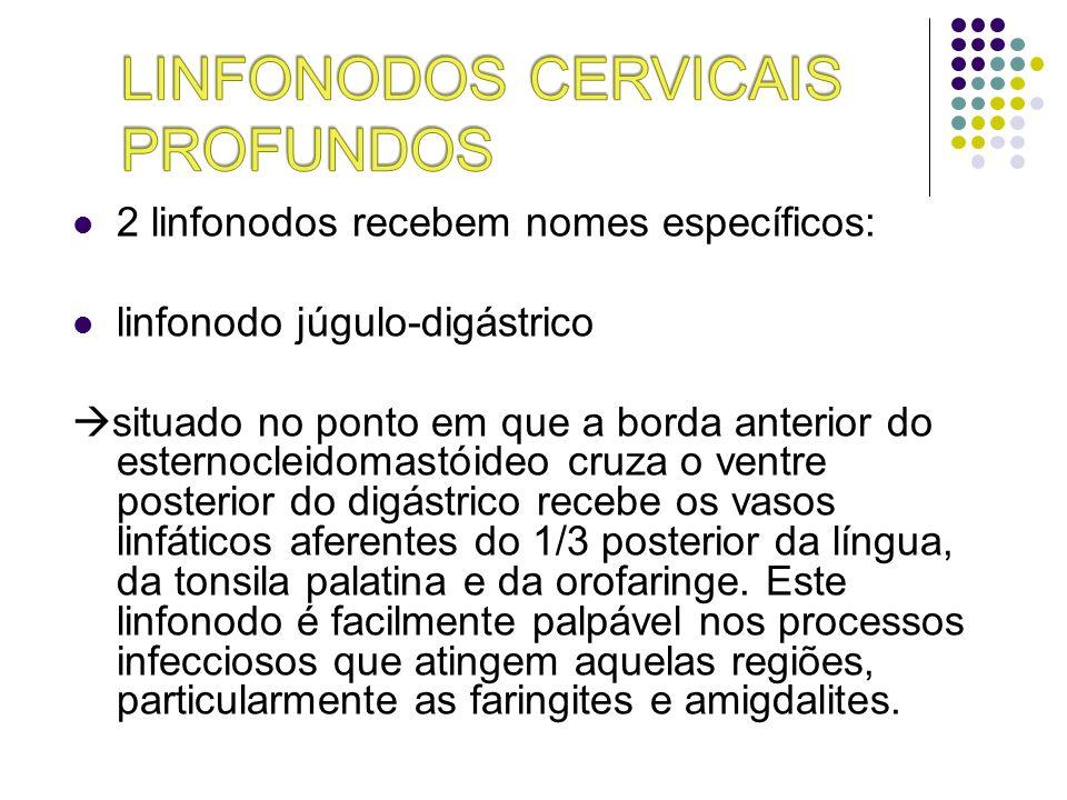 2 linfonodos recebem nomes específicos: linfonodo júgulo-digástrico situado no ponto em que a borda anterior do esternocleidomastóideo cruza o ventre