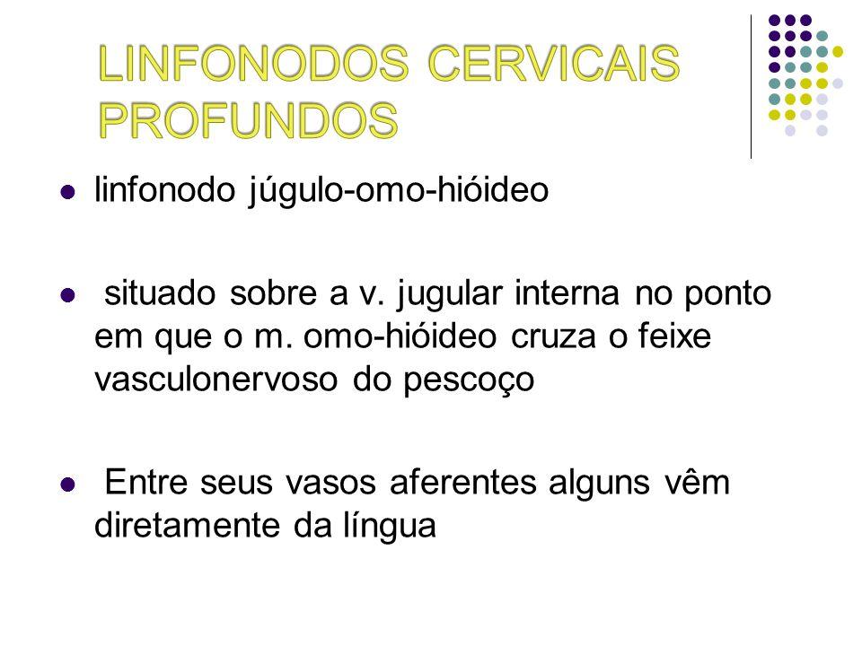 linfonodo júgulo-omo-hióideo situado sobre a v. jugular interna no ponto em que o m. omo-hióideo cruza o feixe vasculonervoso do pescoço Entre seus va