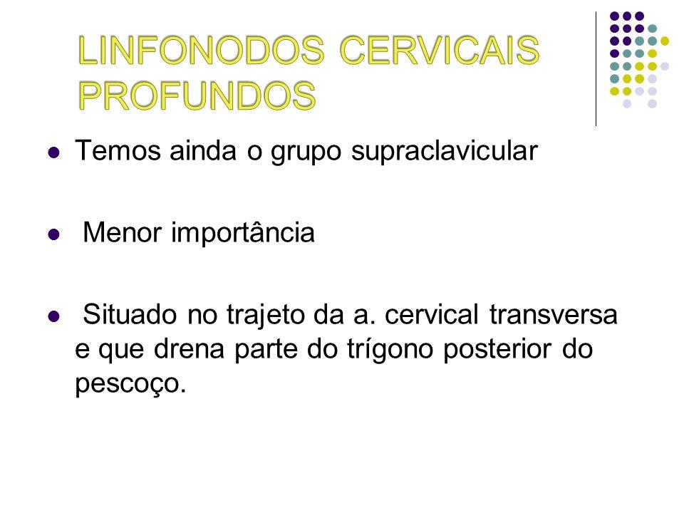 Temos ainda o grupo supraclavicular Menor importância Situado no trajeto da a. cervical transversa e que drena parte do trígono posterior do pescoço.