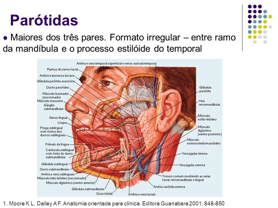 Parótidas Maiores dos três pares. Formato irregular – entre ramo da mandíbula e o processo estilóide do temporal 1. Moore K L, Dalley A F. Anatomia or