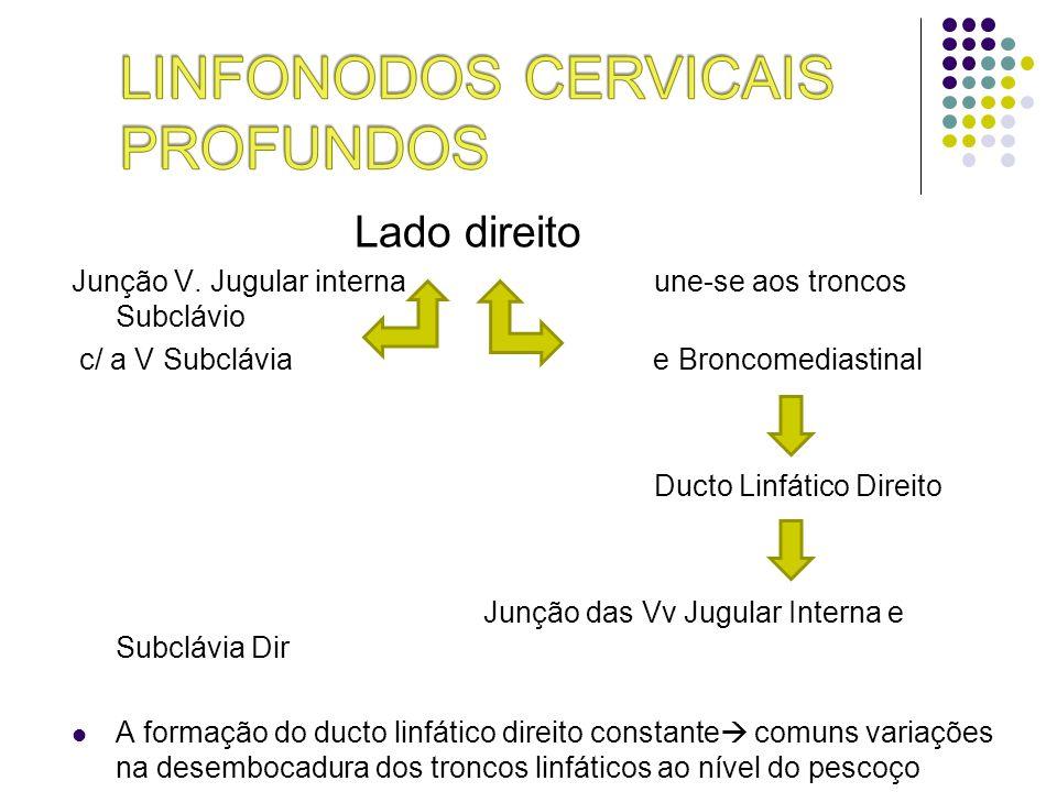 Lado direito Junção V. Jugular interna une-se aos troncos Subclávio c/ a V Subclávia e Broncomediastinal Ducto Linfático Direito Junção das Vv Jugular
