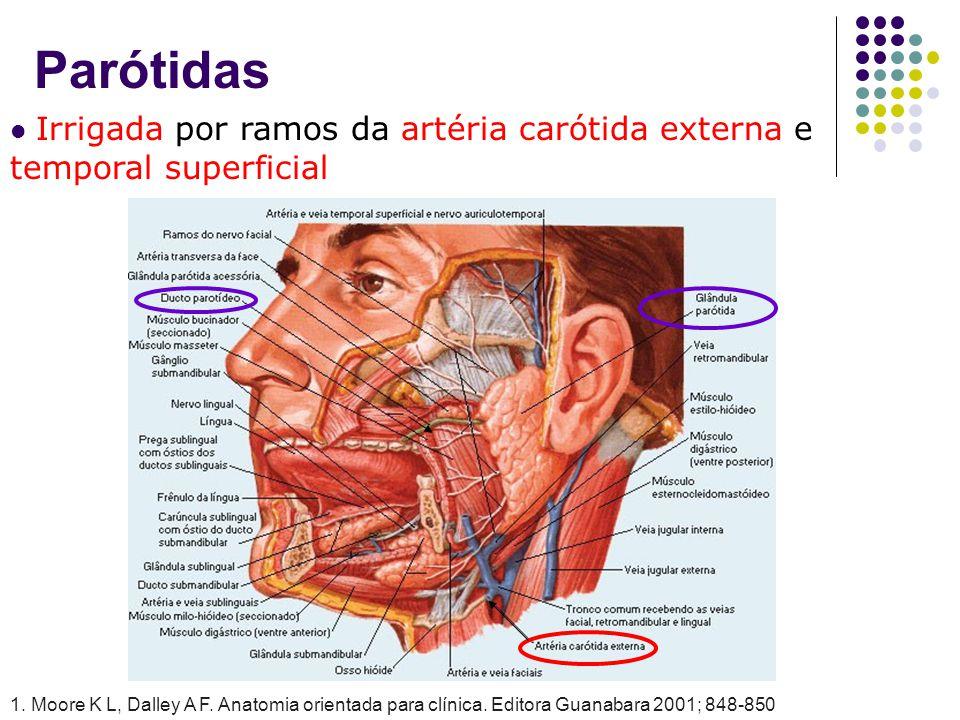 Parótidas Irrigada por ramos da artéria carótida externa e temporal superficial 1. Moore K L, Dalley A F. Anatomia orientada para clínica. Editora Gua