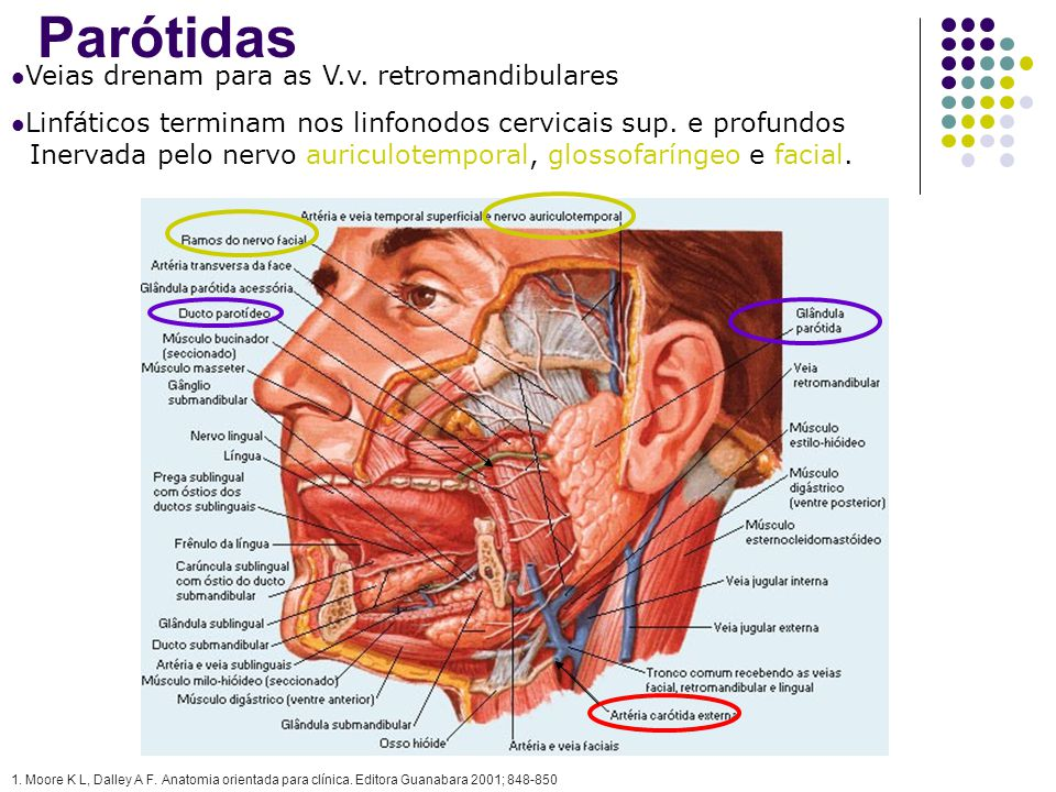 Parótidas Veias drenam para as V.v. retromandibulares Linfáticos terminam nos linfonodos cervicais sup. e profundos Inervada pelo nervo auriculotempor