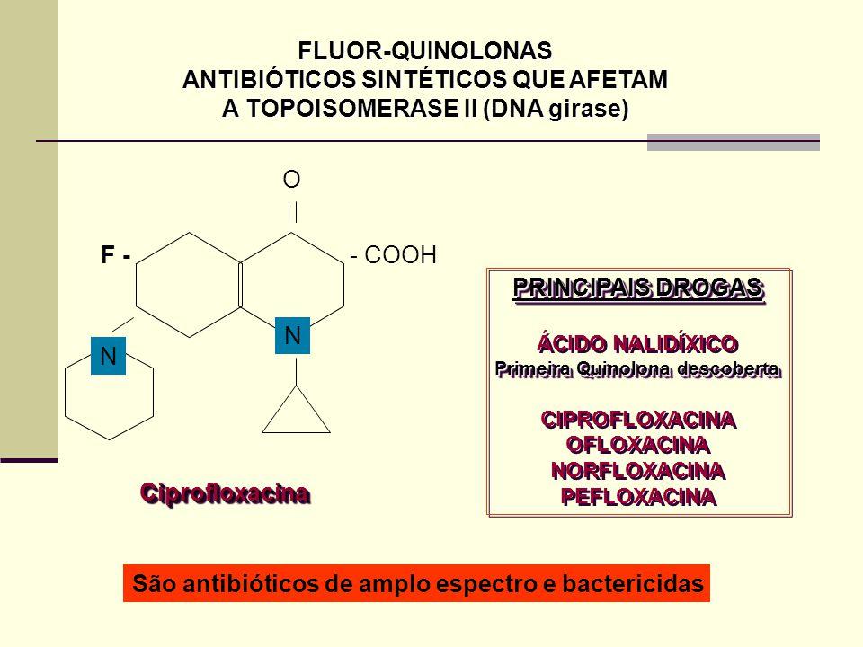 FLUOR-QUINOLONAS ANTIBIÓTICOS SINTÉTICOS QUE AFETAM A TOPOISOMERASE II (DNA girase) O - COOH N F - N CiprofloxacinaCiprofloxacina PRINCIPAIS DROGAS ÁCIDO NALIDÍXICO Primeira Quinolona descoberta CIPROFLOXACINA OFLOXACINA NORFLOXACINA PEFLOXACINA PRINCIPAIS DROGAS ÁCIDO NALIDÍXICO Primeira Quinolona descoberta CIPROFLOXACINA OFLOXACINA NORFLOXACINA PEFLOXACINA São antibióticos de amplo espectro e bactericidas