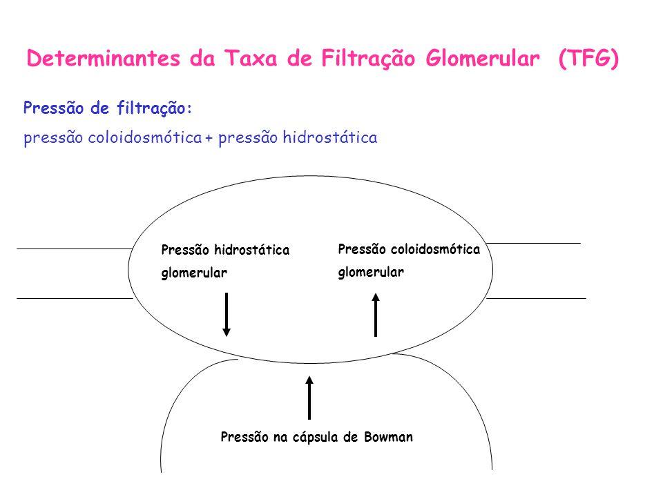 Determinantes da Taxa de Filtração Glomerular (TFG) Pressão hidrostática glomerular Pressão coloidosmótica glomerular Pressão na cápsula de Bowman Pressão de filtração: pressão coloidosmótica + pressão hidrostática