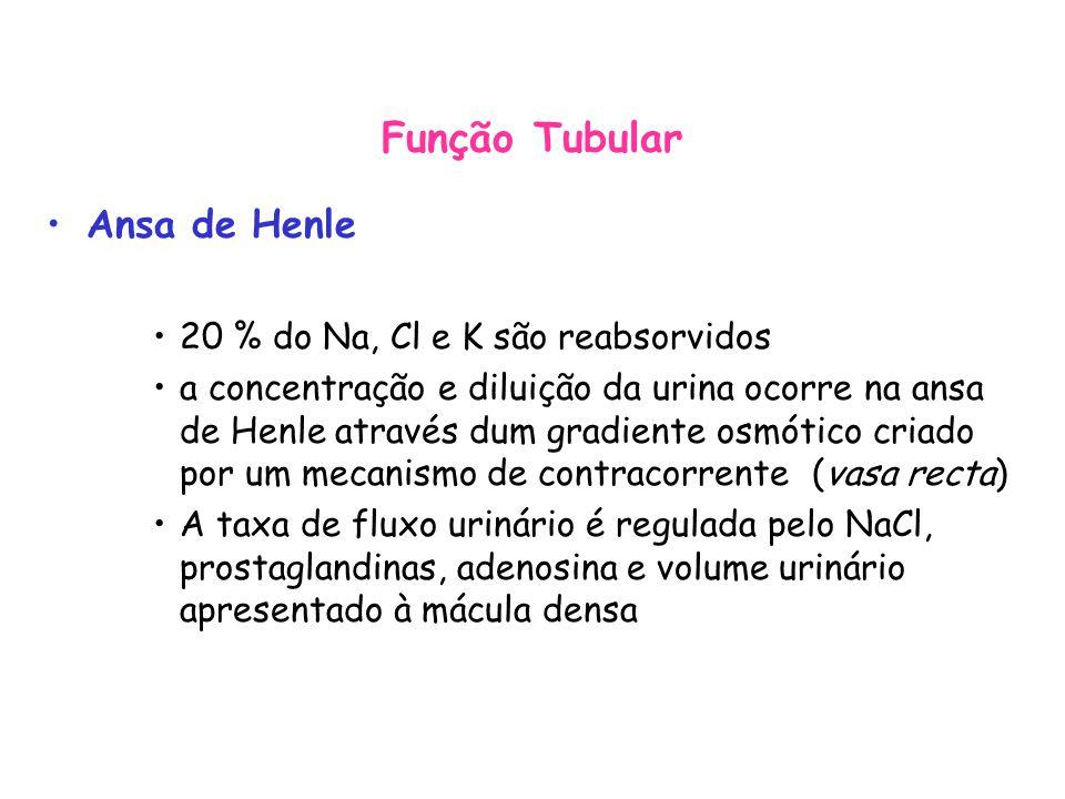 Função Tubular Ansa de Henle 20 % do Na, Cl e K são reabsorvidos a concentração e diluição da urina ocorre na ansa de Henle através dum gradiente osmótico criado por um mecanismo de contracorrente (vasa recta) A taxa de fluxo urinário é regulada pelo NaCl, prostaglandinas, adenosina e volume urinário apresentado à mácula densa