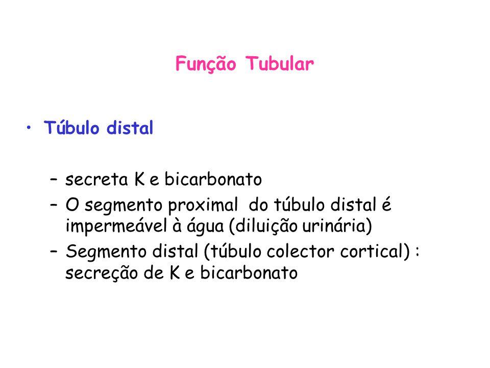 Túbulo distal –secreta K e bicarbonato –O segmento proximal do túbulo distal é impermeável à água (diluição urinária) –Segmento distal (túbulo colector cortical) : secreção de K e bicarbonato Função Tubular