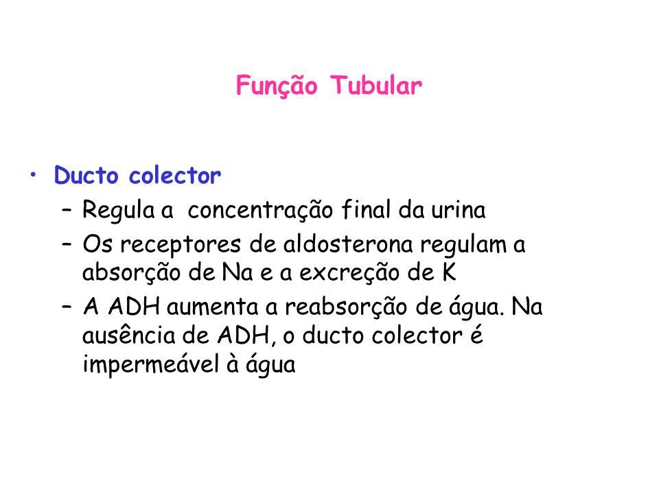 Ducto colector –Regula a concentração final da urina –Os receptores de aldosterona regulam a absorção de Na e a excreção de K –A ADH aumenta a reabsorção de água.