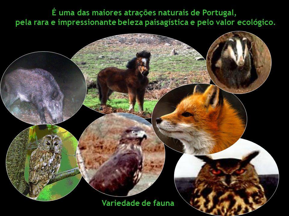 É uma das maiores atrações naturais de Portugal, pela rara e impressionante beleza paisagística e pelo valor ecológico.