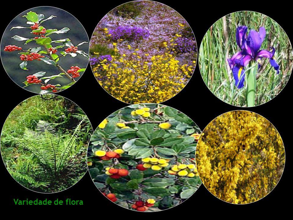 Variedade de flora