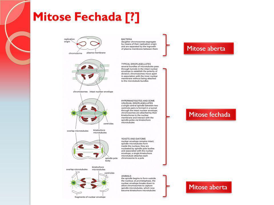 Mitose Fechada [?] Mitose aberta Mitose fechada Mitose aberta