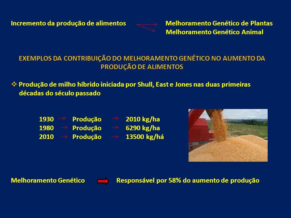 Incremento da produção de alimentos Melhoramento Genético de Plantas Melhoramento Genético Animal EXEMPLOS DA CONTRIBUIÇÃO DO MELHORAMENTO GENÉTICO NO AUMENTO DA PRODUÇÃO DE ALIMENTOS Produção de milho híbrido iniciada por Shull, East e Jones nas duas primeiras décadas do século passado 1930 Produção 2010 kg/ha 1980 Produção 6290 kg/ha 2010 Produção 13500 kg/há Melhoramento Genético Responsávelpor 58% do aumento de produção
