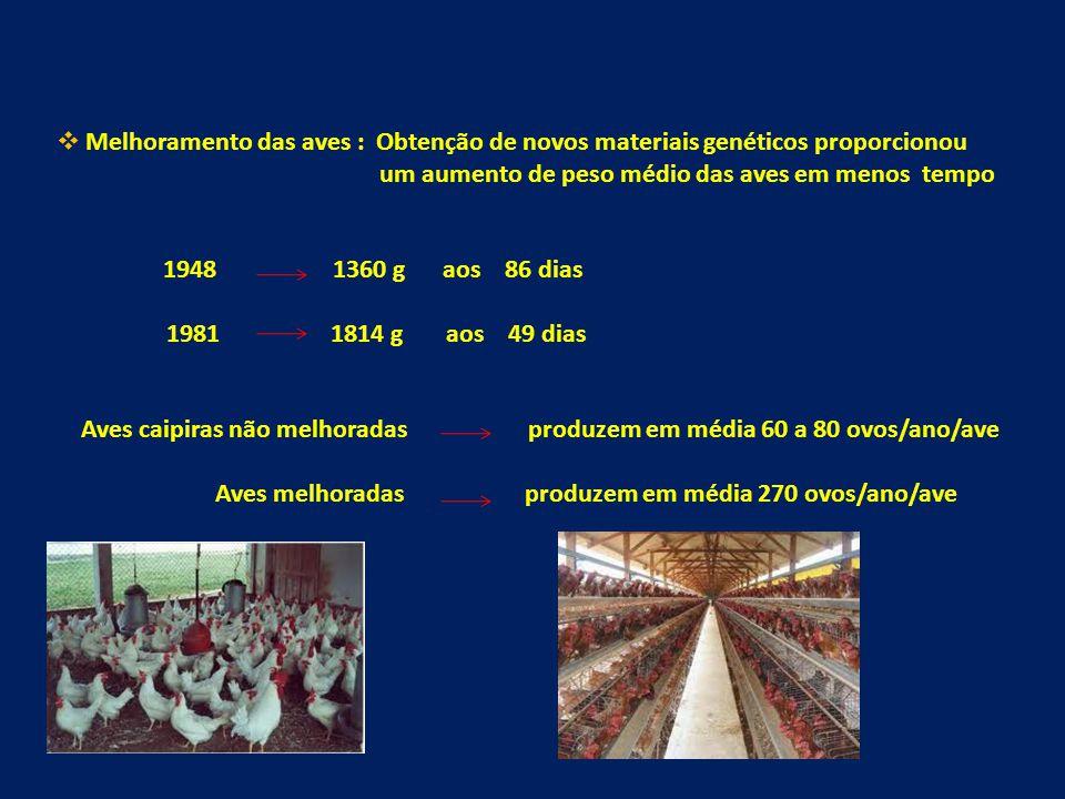 Melhoramento das aves : Obtenção de novos materiais genéticos proporcionou um aumento de peso médio das aves em menos tempo 1948 1360 g aos 86 dias 1981 1814 g aos 49 dias Aves caipiras não melhoradas produzem em média 60 a 80 ovos/ano/ave Aves melhoradas produzem em média 270 ovos/ano/ave