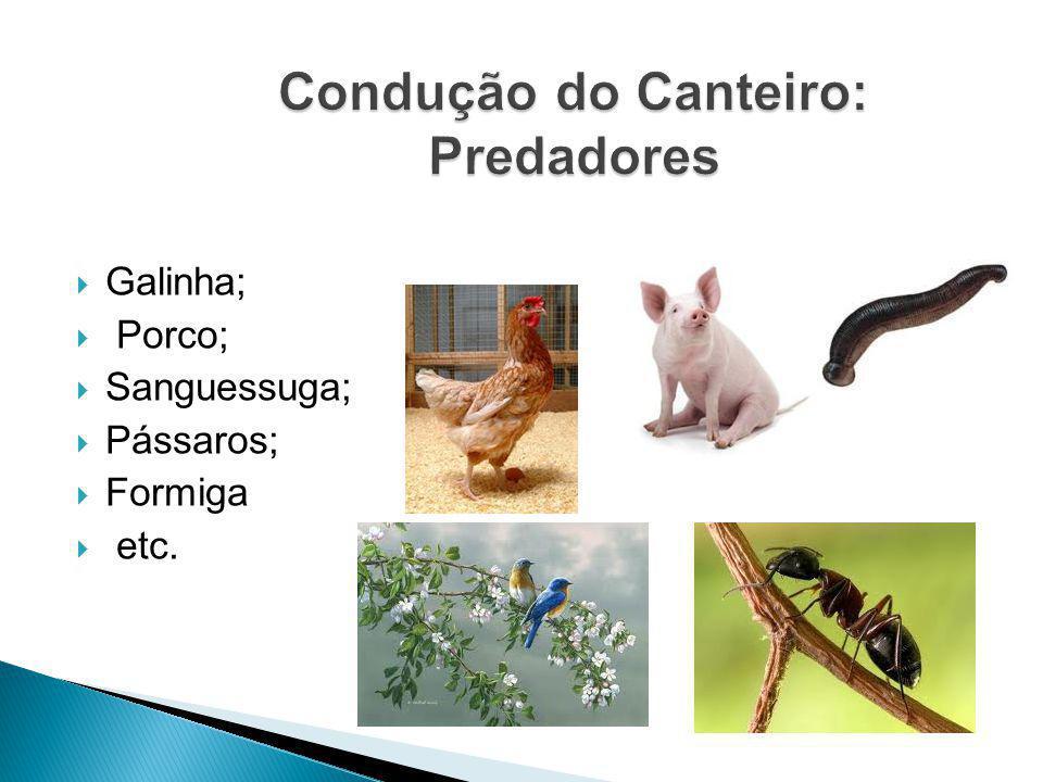 Galinha; Porco; Sanguessuga; Pássaros; Formiga etc.