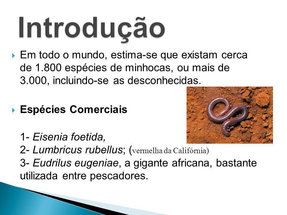 Em todo o mundo, estima-se que existam cerca de 1.800 espécies de minhocas, ou mais de 3.000, incluindo-se as desconhecidas. Espécies Comerciais 1- Ei