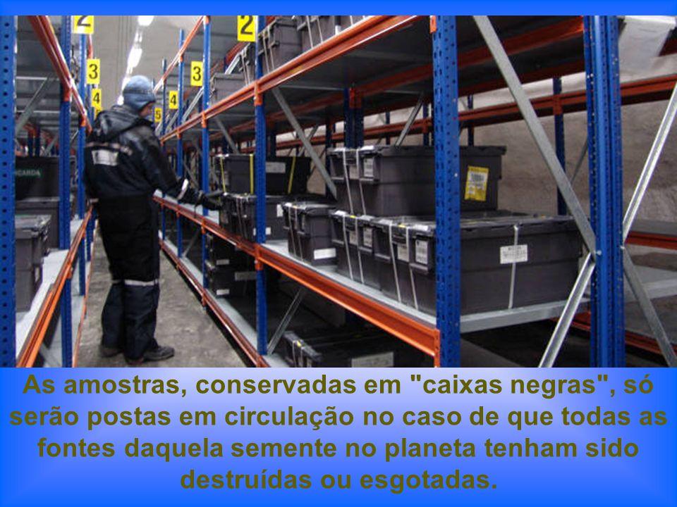 Uma vez que tenham sido registradas e seladas hermeticamente, as amostras de sementes são introduzidas em caixas de plástico e trasladadas a uma das t