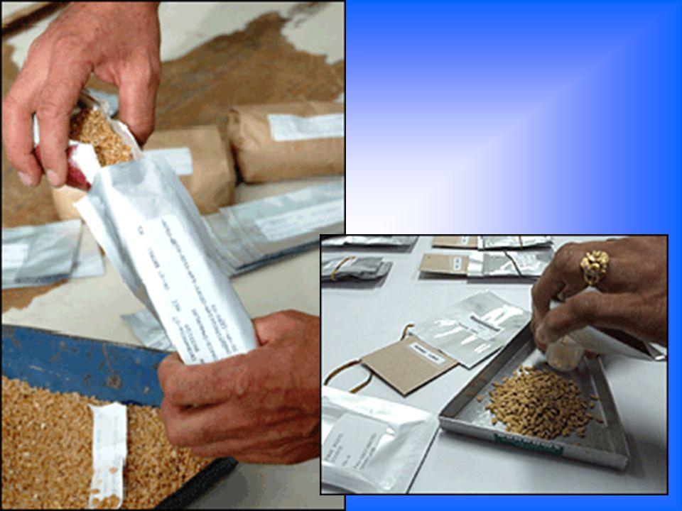 Na atualidade, já existem mais de 1.000 bancos de sementes por todo o mundo. No entanto, muitos deles, sobretudo nos países em vias de desenvolvimento