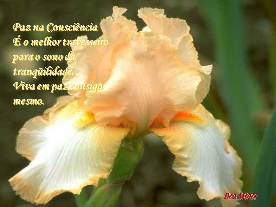 A Alegria É o perfume gratificante, fruto do dever cumprido. Esbanje-o, o mundo precisa dele. A Alegria É o perfume gratificante, fruto do dever cumpr
