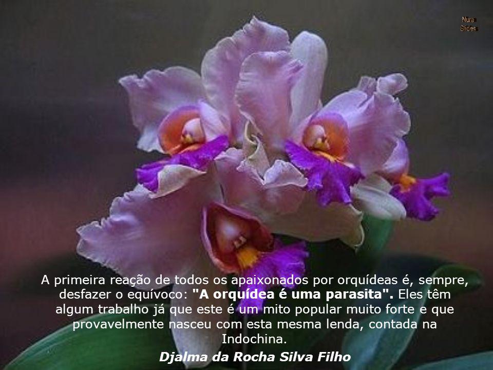 Muitas pessoas acreditam (erroneamente) que as orquídeas são parasitas, no entanto elas apenas usam o hospedeiro para fixar suas raízes.