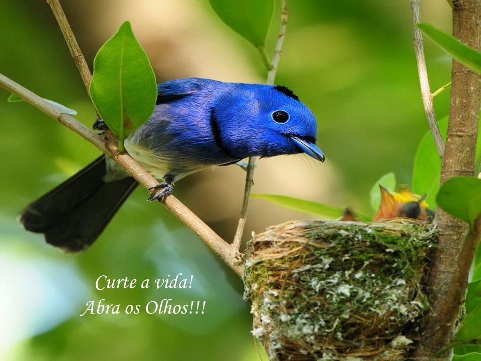 Nenhuma flor nasce sem que seja consentimento do Criador.
