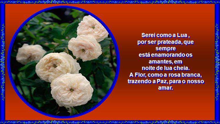 Sou a flor da cor mais pura existente! Vim transmitir Paz e o meu doce sentimento, para aquele que tanto vou amar... Sou a flor da cor mais pura exist