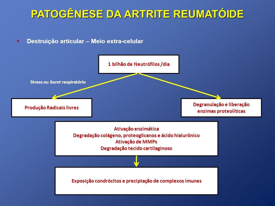 PATOGÊNESE DA ARTRITE REUMATÓIDE Destruição articular – Meio extra-celular 1 bilhão de Neutrófilos /dia Produção Radicais livres Ativação enzimática D