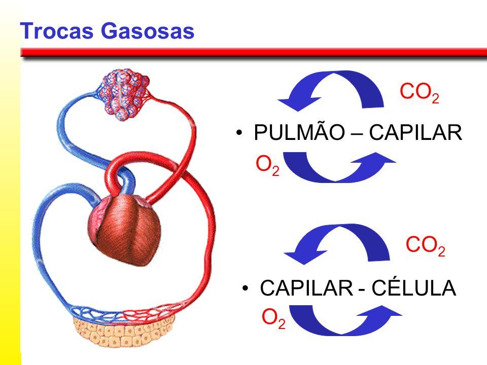 Trocas Gasosas PULMÃO – CAPILAR CAPILAR - CÉLULA O2O2 CO 2 O2O2