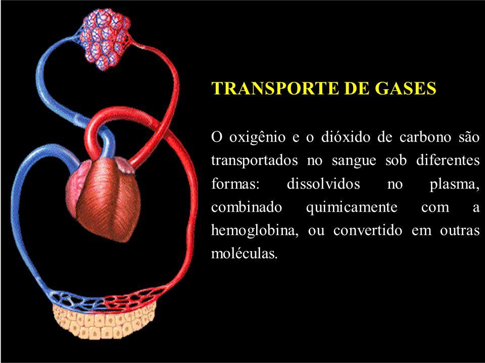TRANSPORTE DE GASES O oxigênio e o dióxido de carbono são transportados no sangue sob diferentes formas: dissolvidos no plasma, combinado quimicamente com a hemoglobina, ou convertido em outras moléculas.