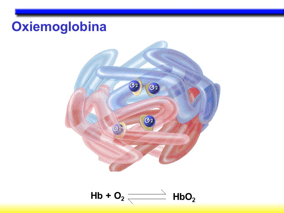 Oxiemoglobina Hb + O 2 HbO 2