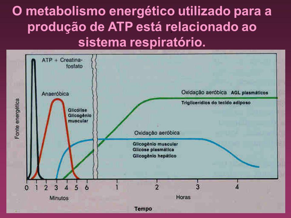 O metabolismo energético utilizado para a produção de ATP está relacionado ao sistema respiratório...