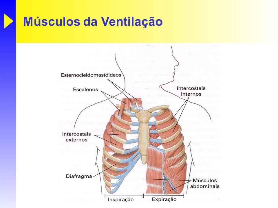 Trocas Gasosas O oxigênio e o dióxido de carbono se movimentam entre os alvéolos e os capilares pulmonares no pulmão, e entre os capilares sistêmicos e as células.