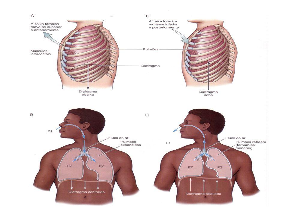 INSPIRAÇÃO: diafragma e intercostais externos CONTRAEM CAVIDADE TORÁCICA VOLUME PRESSÃO EXPIRAÇÃO: diafragma e intercostais externos RELAXAM CAVIDADE TORÁCICA VOLUME PRESSÃO EXPIRAÇÃO FORÇADA: músculos acessórios (abdominal e intercostal Interno) CONTRAEM