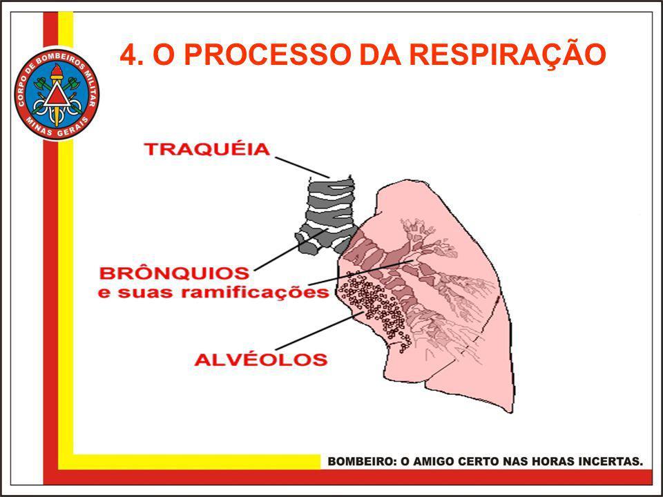 4. O PROCESSO DA RESPIRAÇÃO