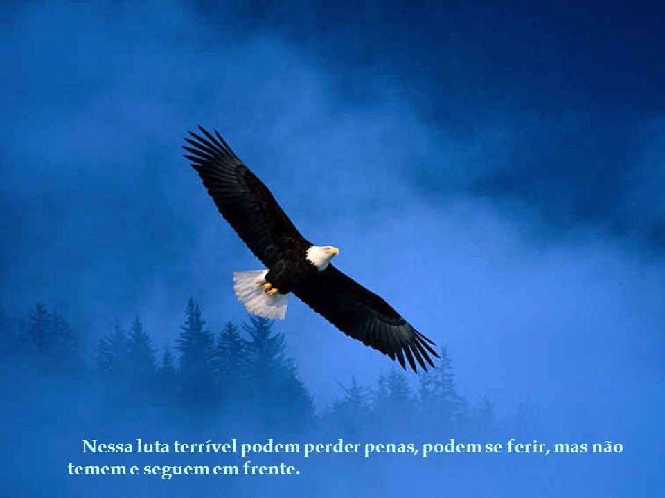 Elas nao se escondem! Abrem suas asas que podem voar a uma velocidade de até 90 km/h, e enfrentam a tormenta! Elas sabem que as nuvens escuras, a temp