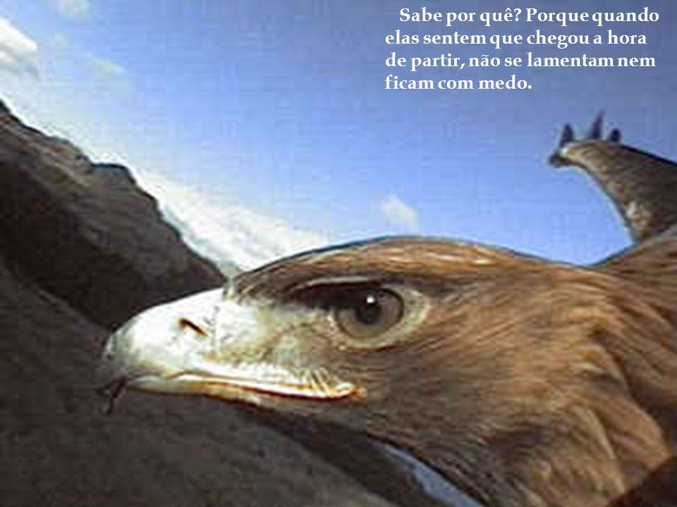 Finalmente, as águias também morrem. Mas alguma vez você achou por aí um cadáver de águia? De galinha talvez, de cachorro ou de pombo, quem sabe até d