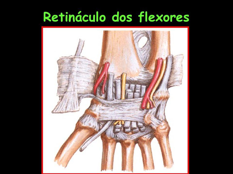 Retináculo dos flexores